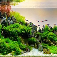 Best-Rocks-for-Freshwater-Aquarium