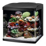 Best-30-Gallon-Fish-Tanks