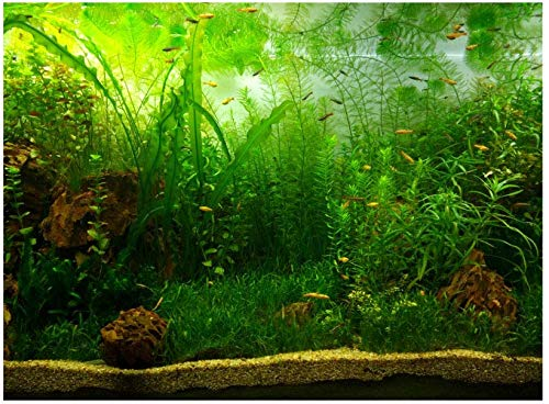 aquarium-plants-to-reduce-nitrates