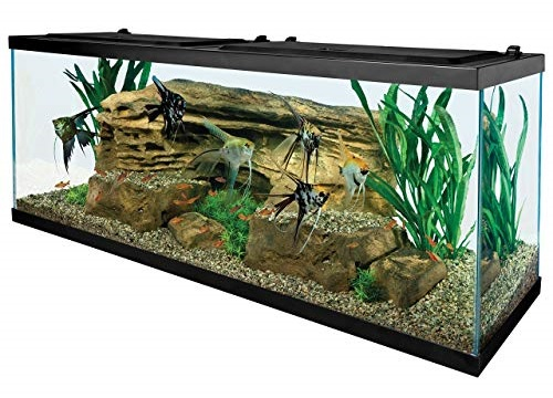 Best-55-Gallon-Fish-Tanks