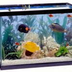 Best-Aquarium-Plants-to-Reduce-Nitrates