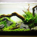 Best-Aquarium-Water-Changers