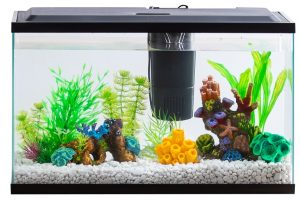 Filter-for-20-Gallon-Aquarium
