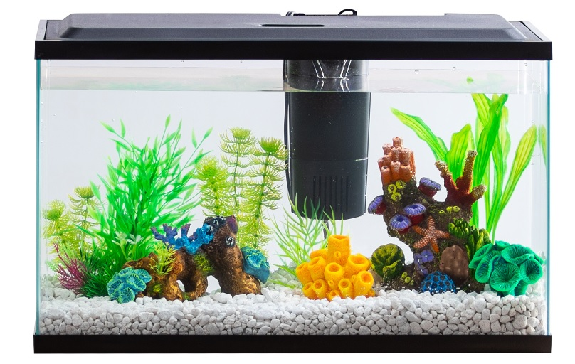 Best-Filter-for-20-Gallon-Aquarium