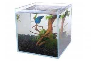 Best-Rimless-Aquariums
