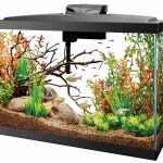 best-filter-for-55-gallon-aquarium