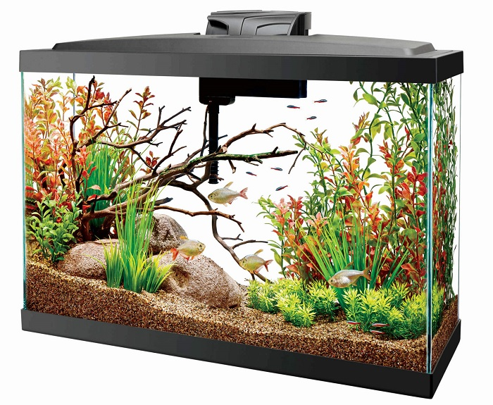 Top 6 Best Filter For 55 Gallon Aquarium In 2021 Reviews Buying Guide