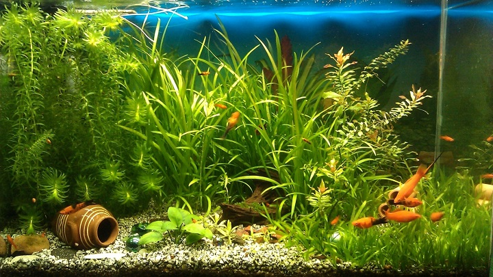 Best-Aquarium-Vacuum-Cleaners