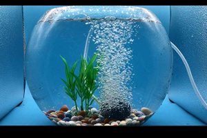 Best-Air-Stones-for-Aquarium