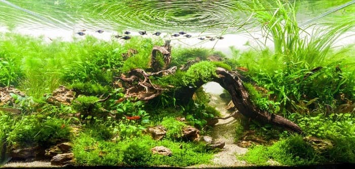 Best-Low-Light-Aquarium-Plants