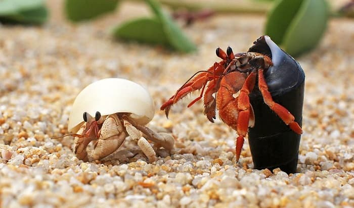 Best-Hermit-Crab-Food