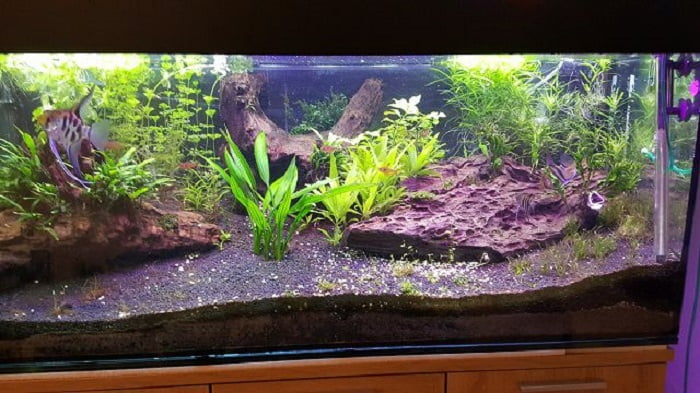 Best-100-Gallon-Fish-Tanks