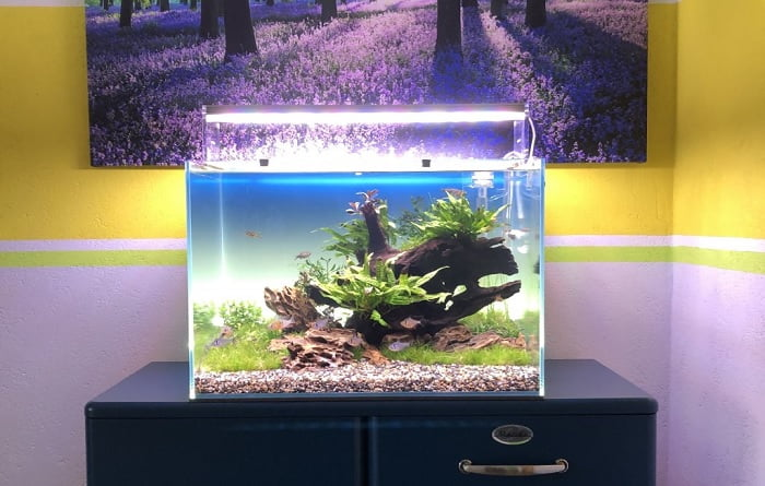 Best-3-Gallon-Fish-Tanks