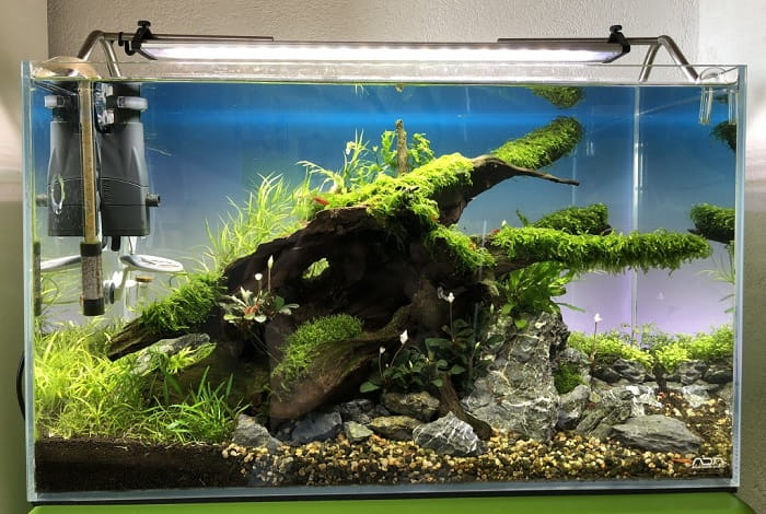 Best-40-Gallon-Fish-Tanks