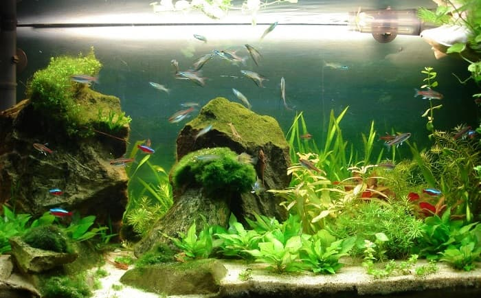 Best-75-Gallon-Fish-Tanks