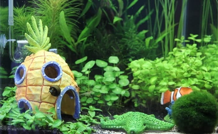 Best-Aquarium-Carpet-Plants