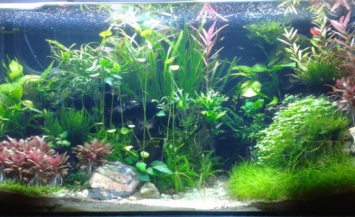 Best-Floating-Aquarium-Plants