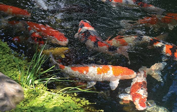 Best-Koi-Pond-Filters