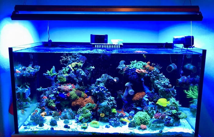 Best-Nano-Reef-Tanks