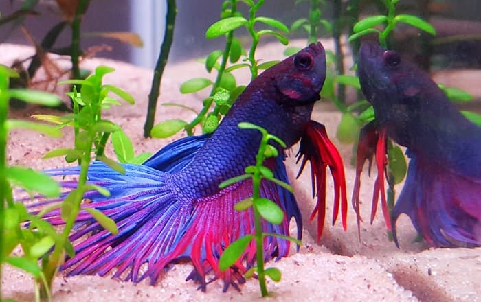 Best-Plants-for-Betta-Fish