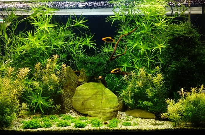 Can-I-Use-Outdoor-Gravel-or-Rocks-in-an-Aquarium