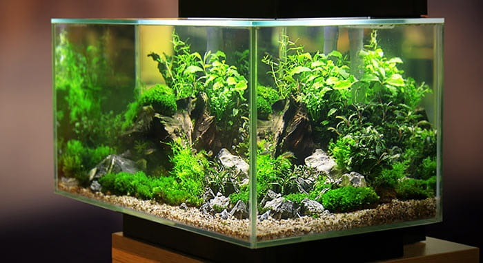 How-To-Treat-Smelly-Aquarium-Water