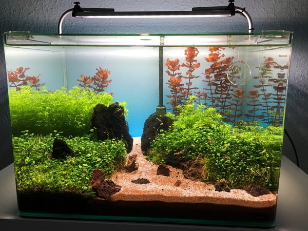 How-to-Cycle-a-Fish-Tank