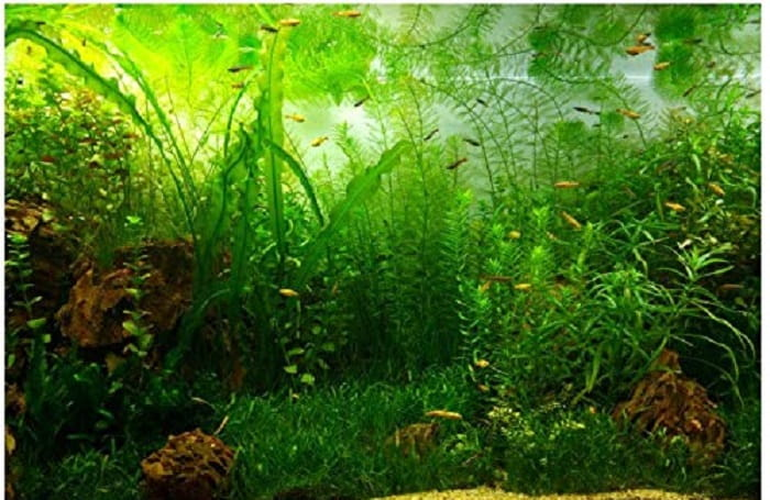 How-to-Lower-Nitrate-in-the-Aquarium